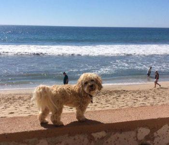 dog-travel-tips